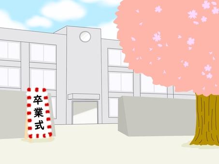 학교 교문 벚꽃