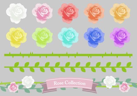 로즈 컬렉션