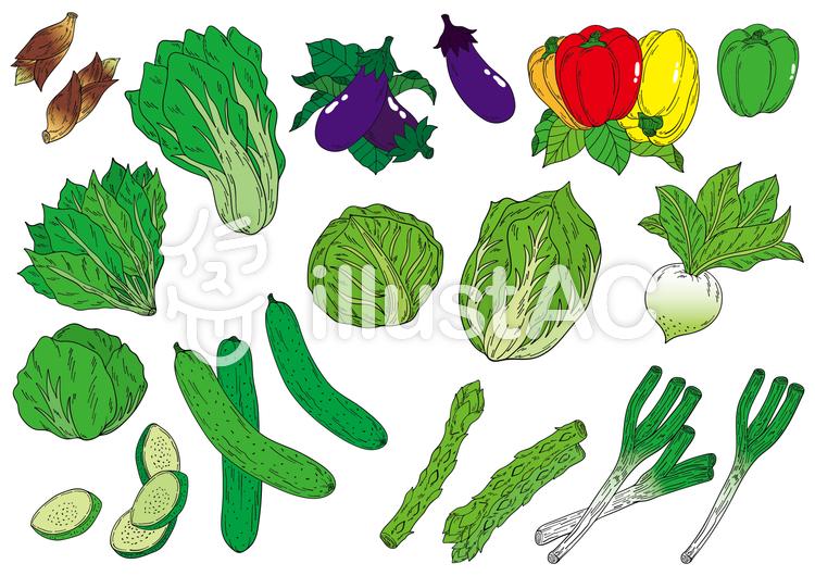 お野菜イラスト素材セットイラスト No 1233109無料イラストなら