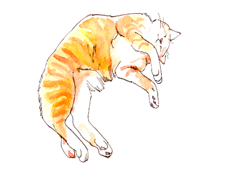 Sleeping cat -1