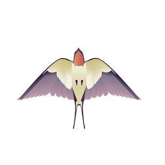 제비 (비행)