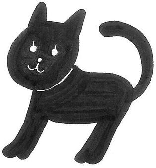 Black Cat Mr. black cat