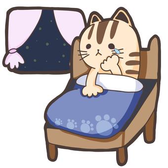 Crying cat night