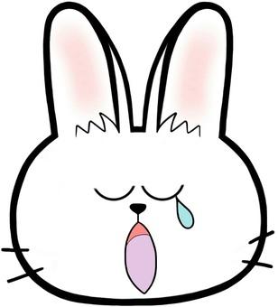 하품하는 토끼