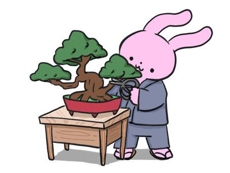분재 손질 토끼