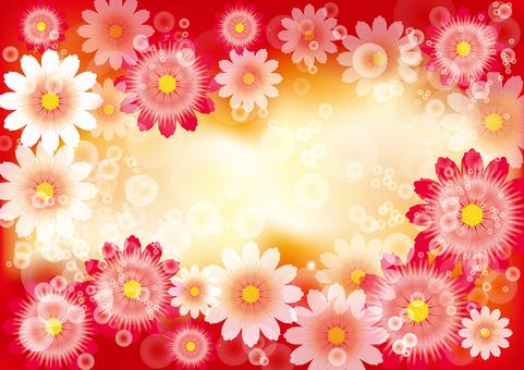 花卉菊花5