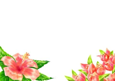 Hibiscus and Bougainvillea