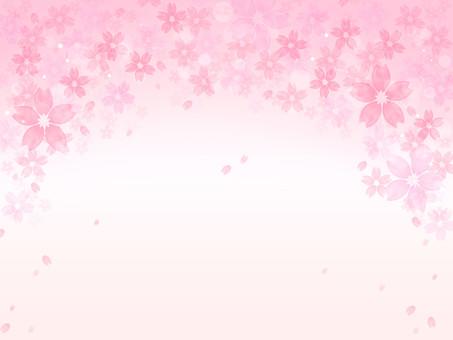 Cherry blossom background illustration 01