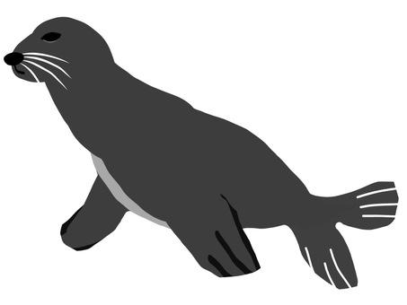 Sea fellow fur seals