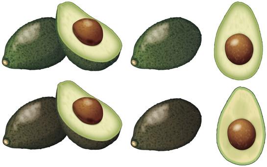 Avocado 2 / Fruits