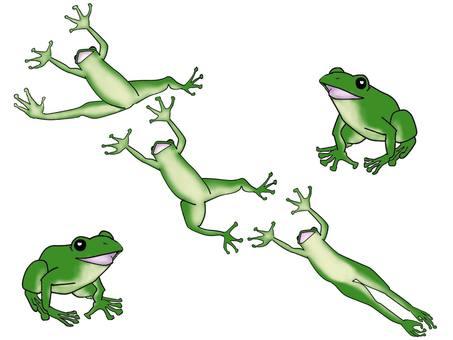Frog frogs rejoice in the rainy season