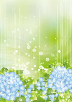 雨の中の紫陽花69