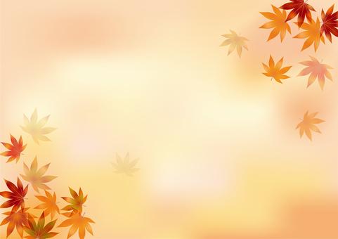 Autumn leaves 215