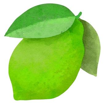 Watercolor ingredients series lime