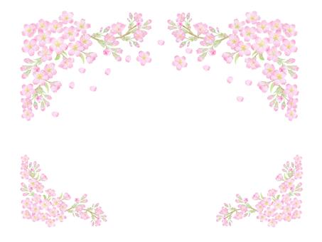 벚꽃 만개 카드 ★ 0392-C