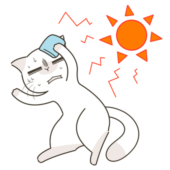 Heat stroke cat