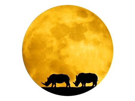 달과 싸이