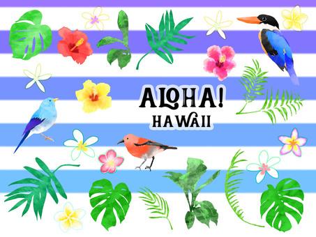 ALOHA! Hawaii
