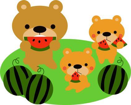 Bear eating watermelon