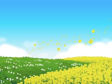Nanohana and Clover's blue sky Hara Landscape 06