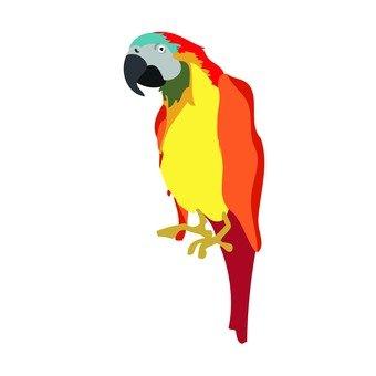 Parrot 02