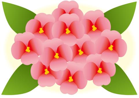 Flower, flower tabby