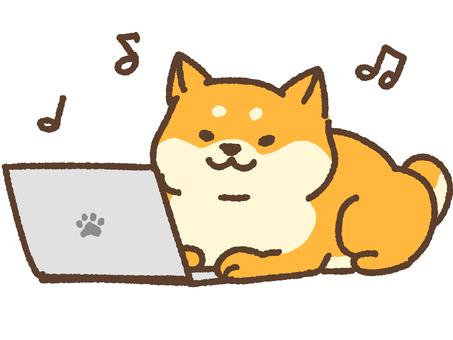PC and Shiba Inu