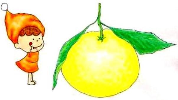 Citrus: gold mandarin