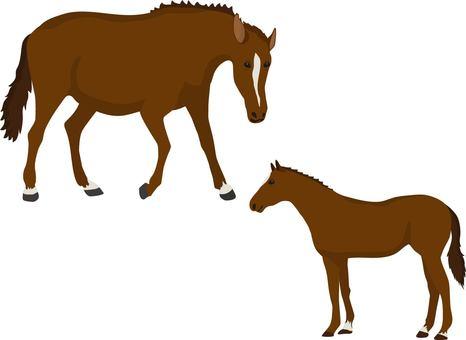 Horse parent