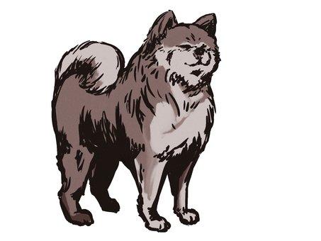 Sumigata風格的秋田狗