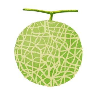 Watercolor ingredients series melon