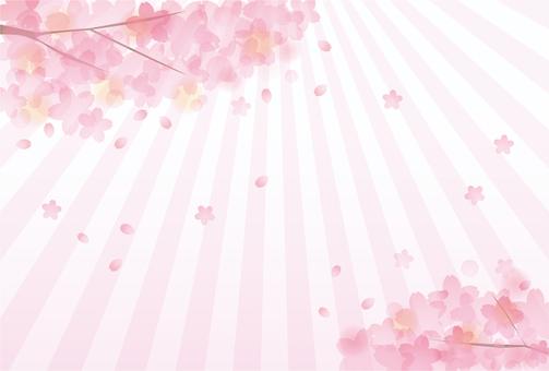 Sakura Sakura 17 - 23