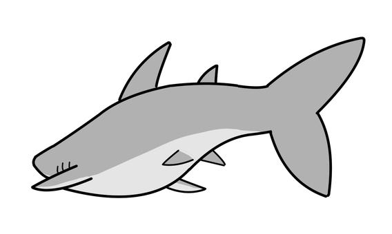 鯊魚,後視圖