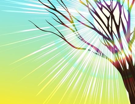 Dead tree _ sunlight