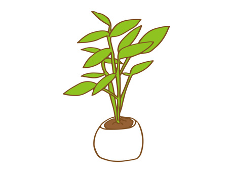 관엽 식물 2