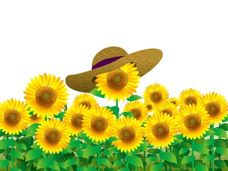 Sunflower field and straw hat (2) No background