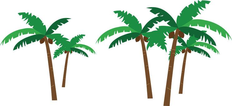 Palm tree - color