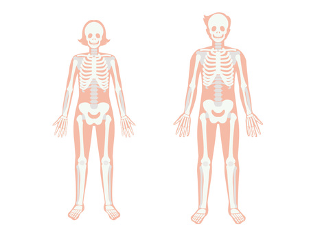 Human body _ skeleton _ male and female
