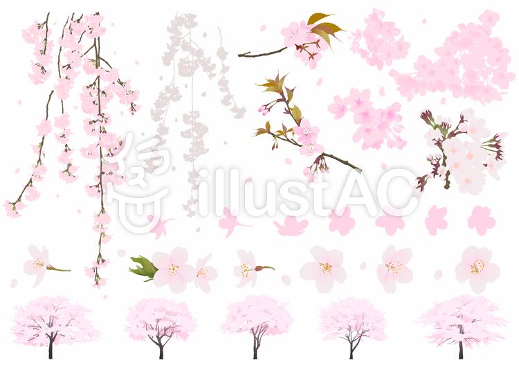 リアル桜セットのイラスト