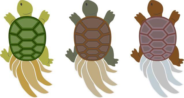 Longevity turtle