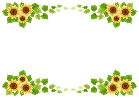 Sunflower 49