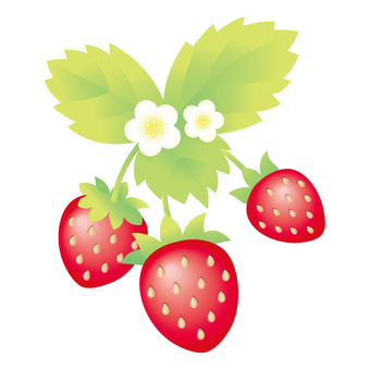 Strawberry Material 3