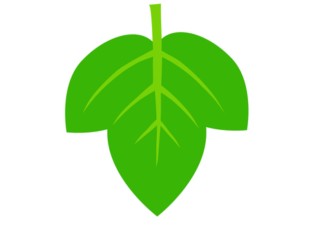 Green leaf (morning glory)