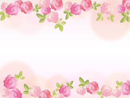 玫瑰花粉红色