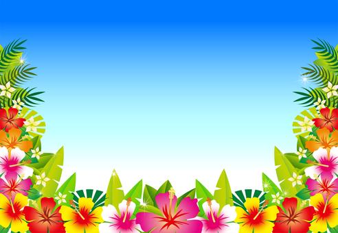 Hibiscus - No.3