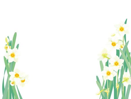 Narcissus 7