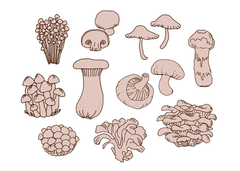 各種蘑菇3
