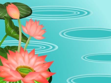 Lotus flower ②