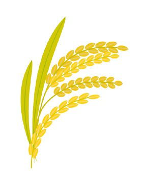 Illustration of rice ear (vector)