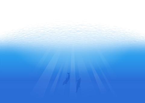 海豚在水下游泳